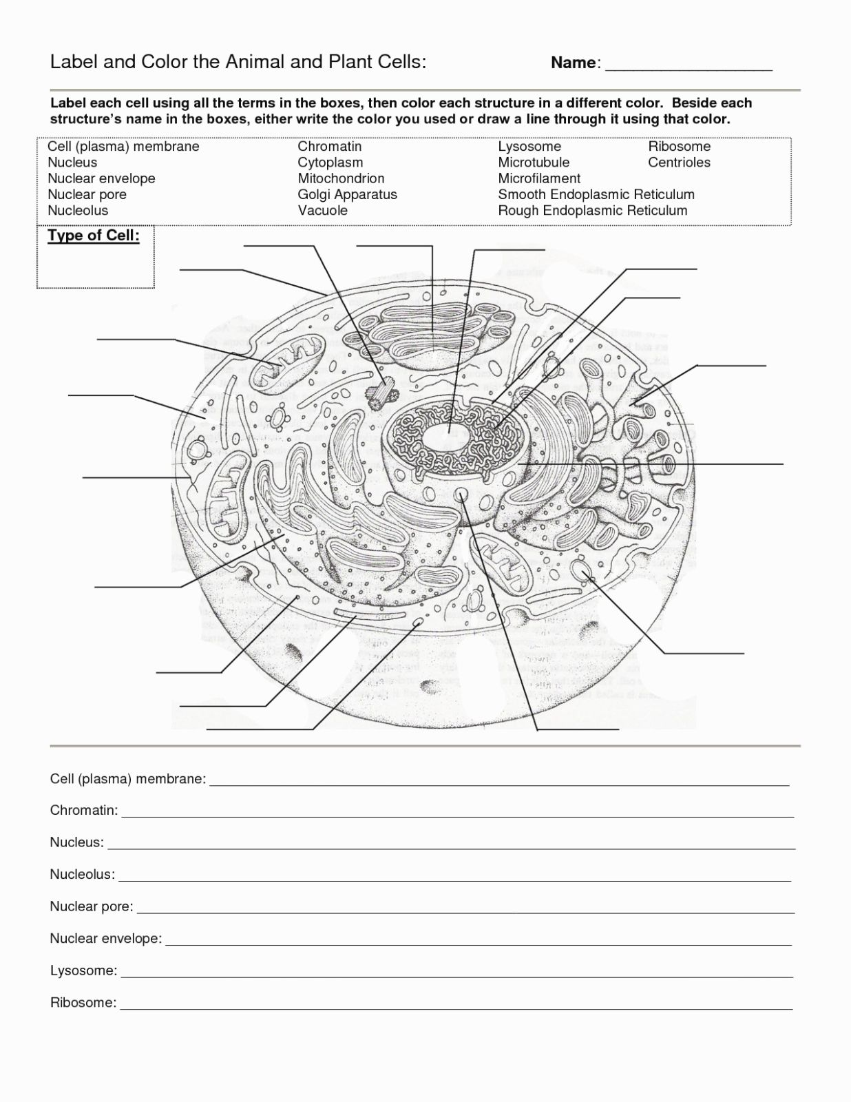 50 Animal Cell Worksheet Answers In