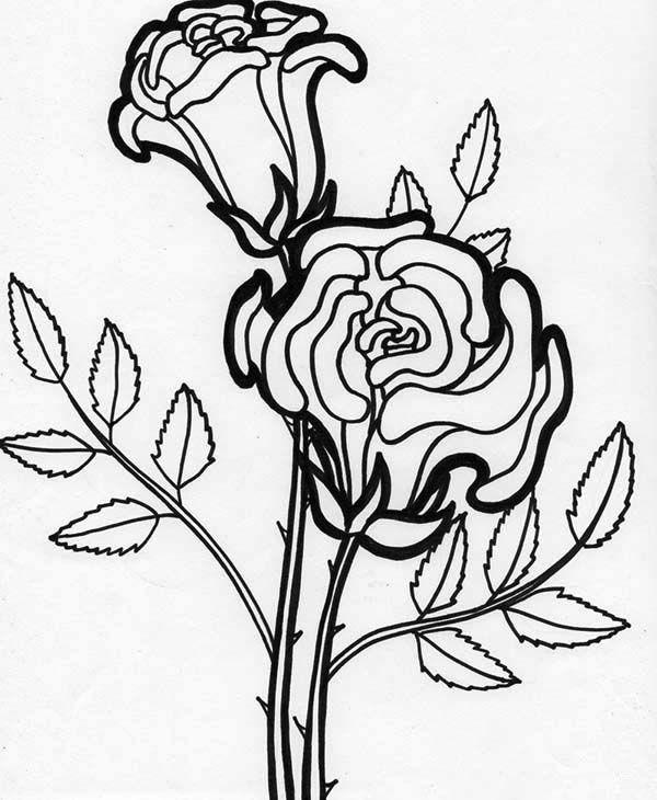 Flowers Rose Flower Blooming Coloring Page Rose Flower Blooming