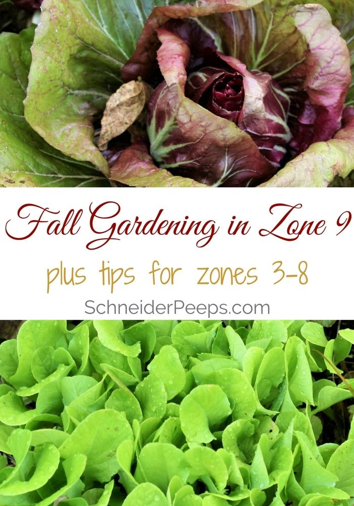 Fall gardening in zone 9 {with links to other zones}