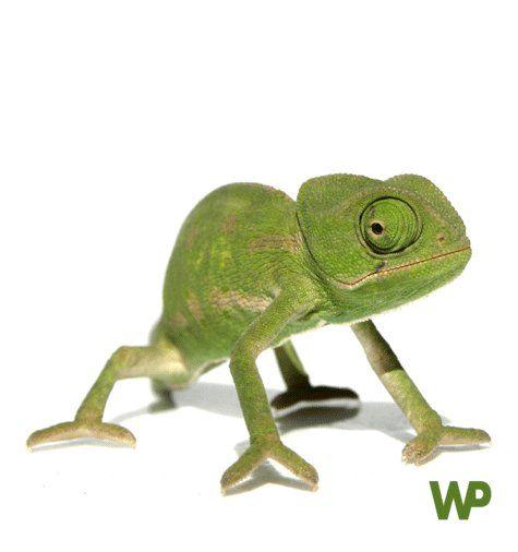 Alimentación y accesorios para reptiles.  Tienda de mascotas online Wakuplanet.com