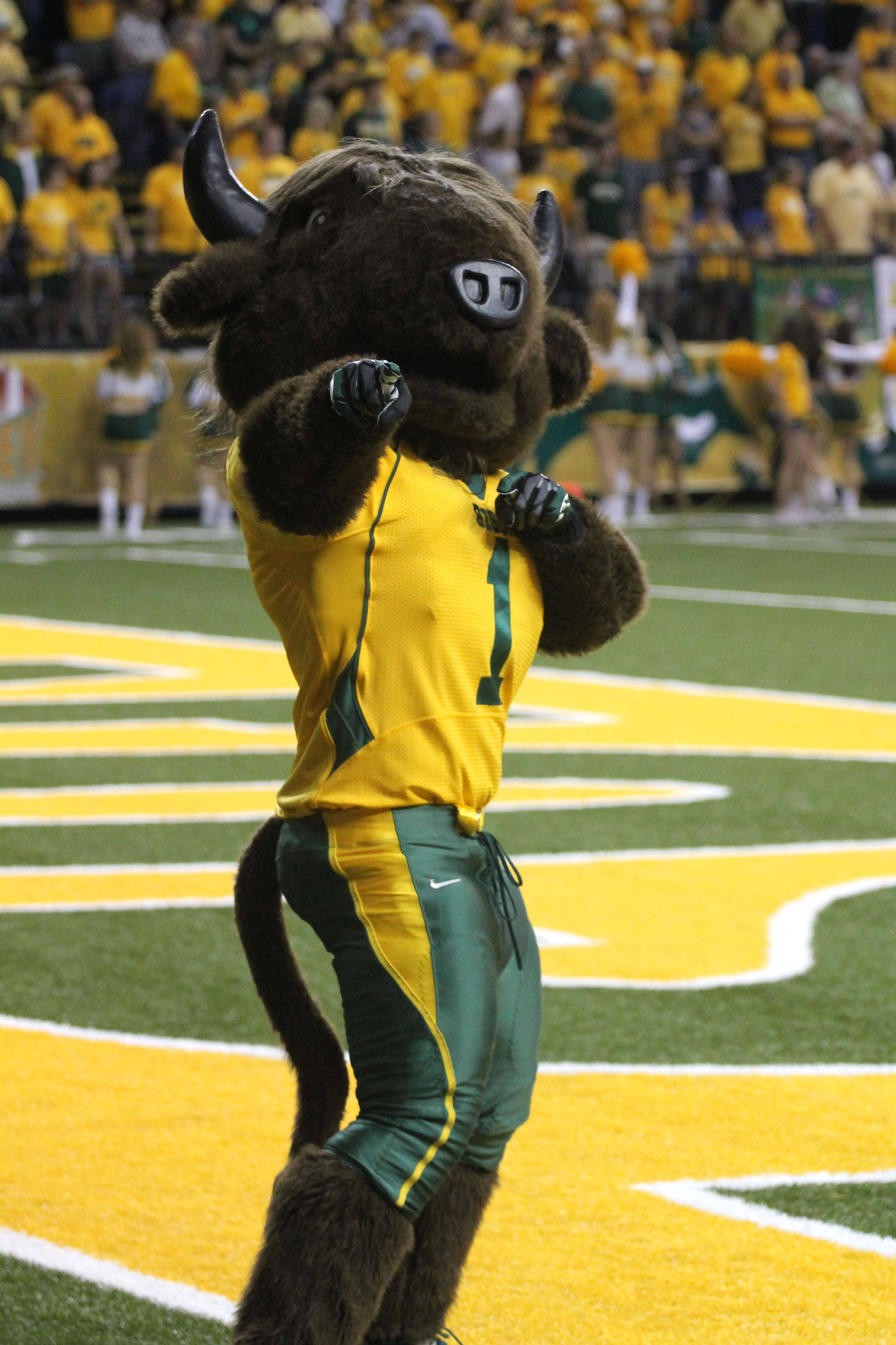 Always reppin' the Green and the Gold Ndsu bison