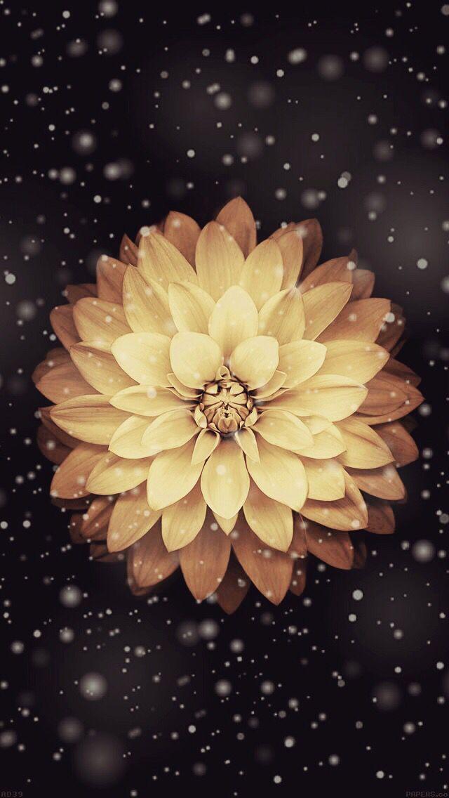 Flower Gold Wallpaper Iphone Flower Wallpaper Iphone Wallpaper