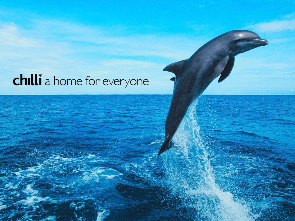 Free Dolphin Wallpapers Wallpaper 1920×1200 Pictures Of