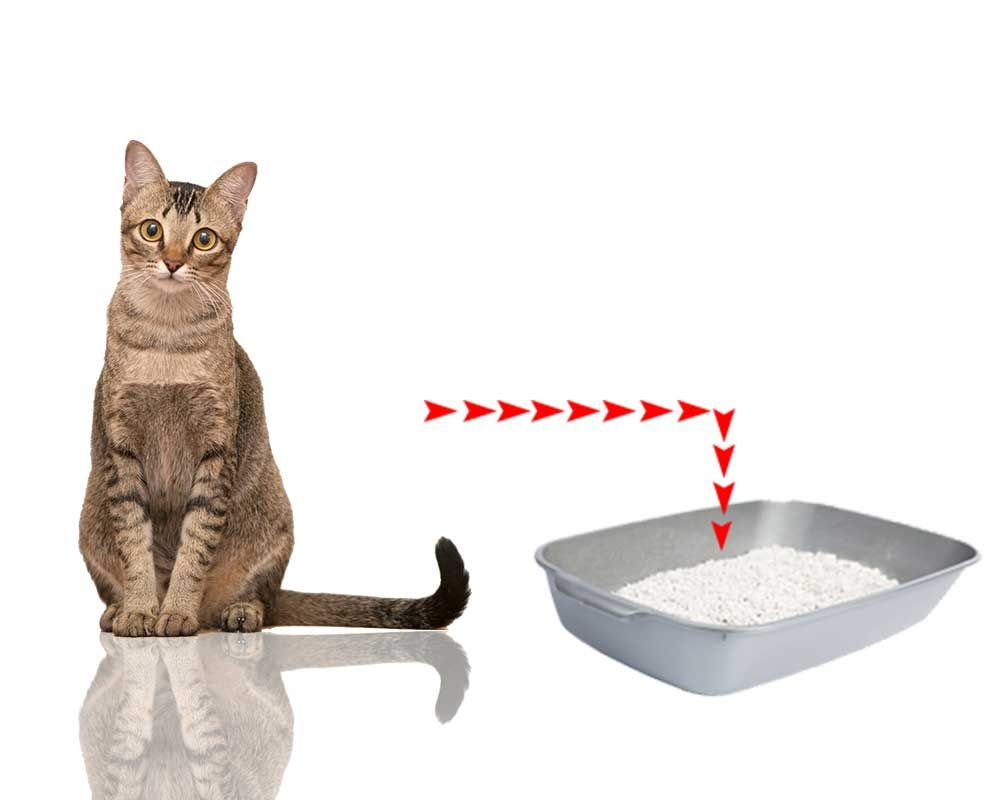 How To Litter Train Your Cat Cats Litter Box Cool Cats