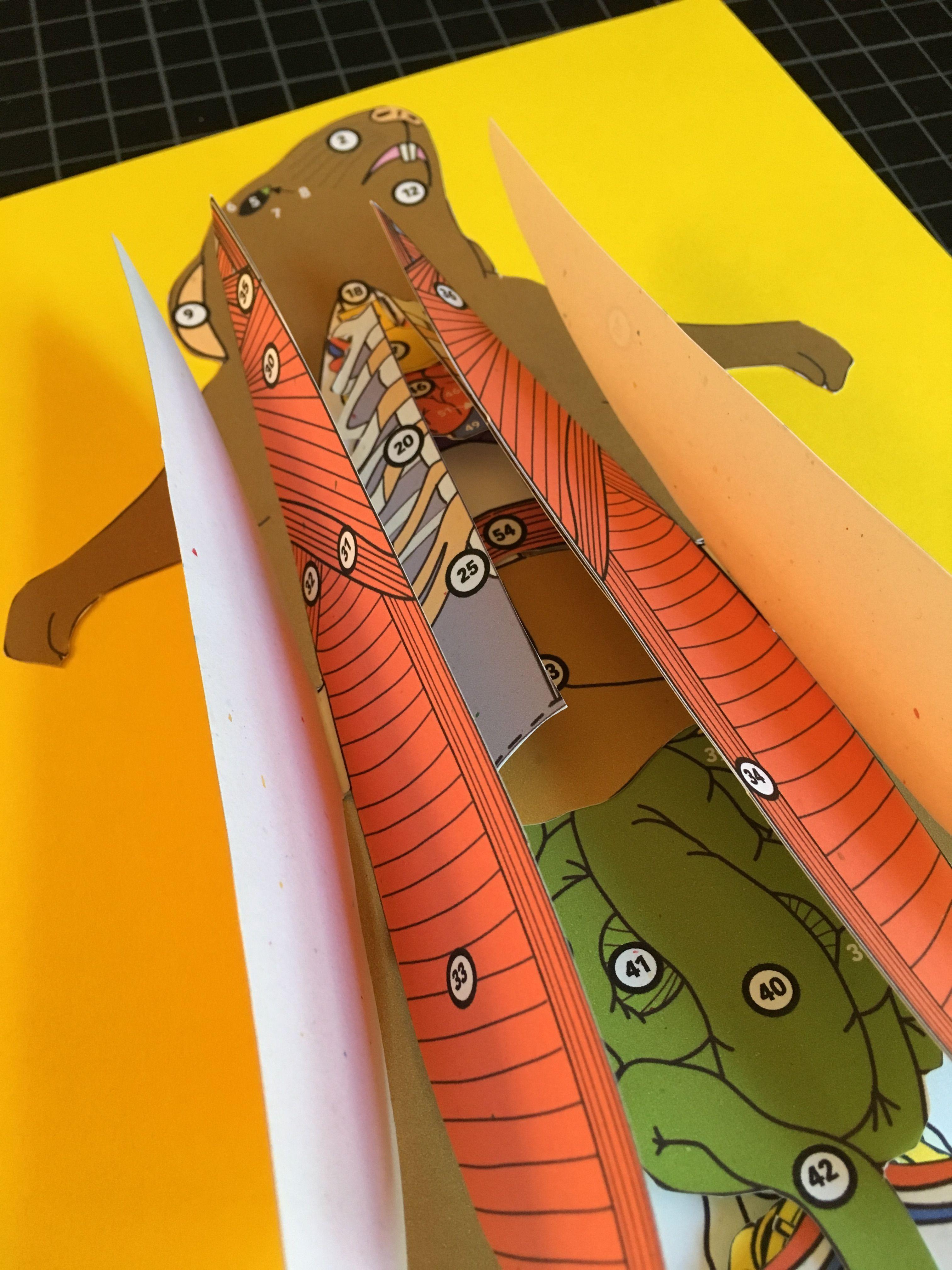 Rat Paper Dissection