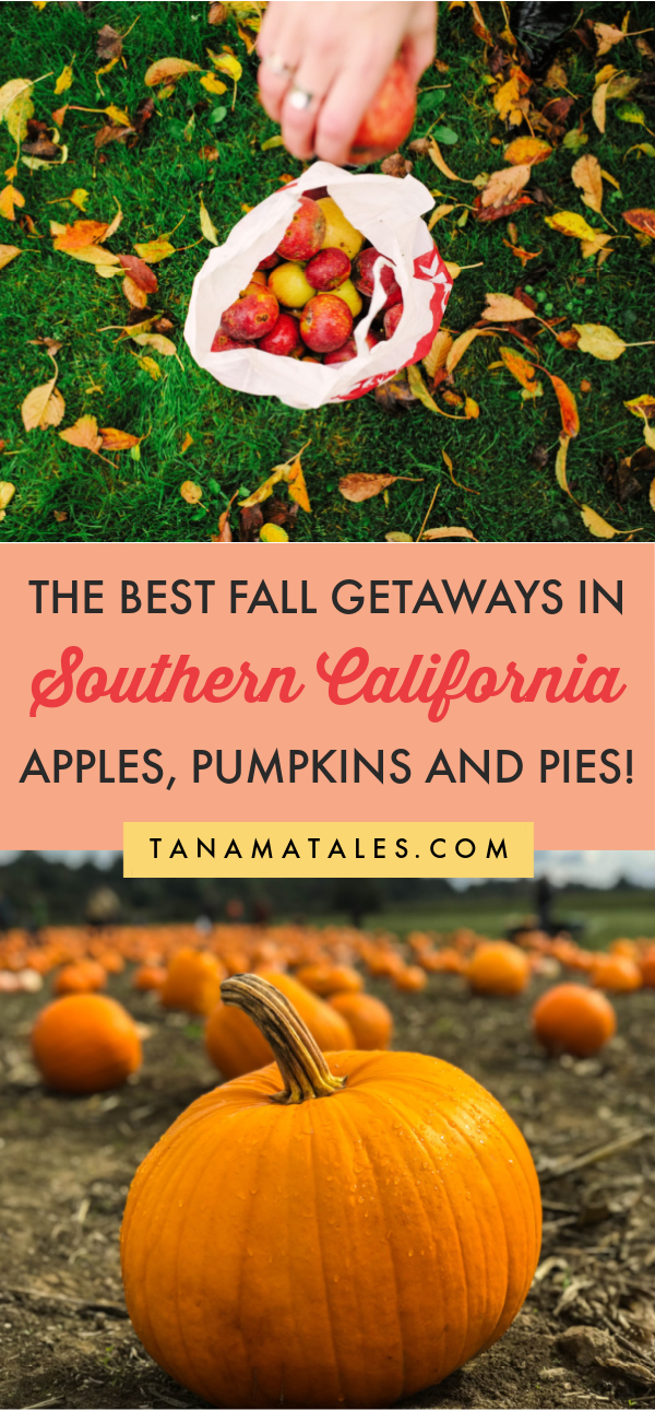 Fall In Southern California What To Do See And Eat Autumn In Southern California Fall In Los Angeles Fall In San Diego Fall In