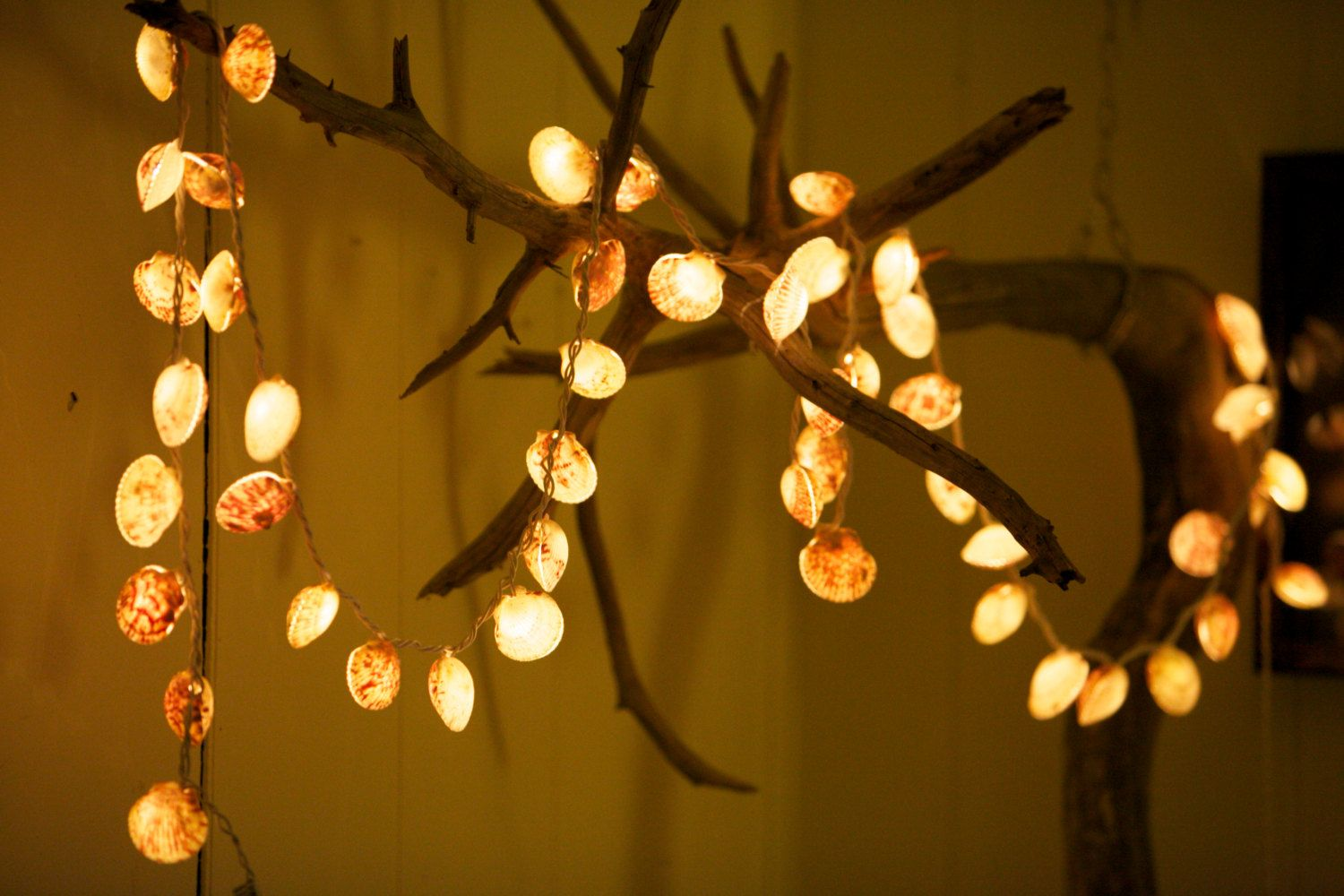 Scallop Shell String 50 Lights By Driftalonglamps On Etsy 85 00