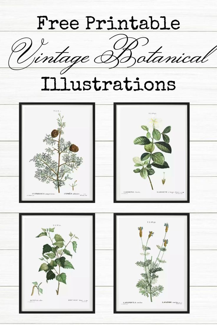 Bathroom Art Printables Botanical Prints