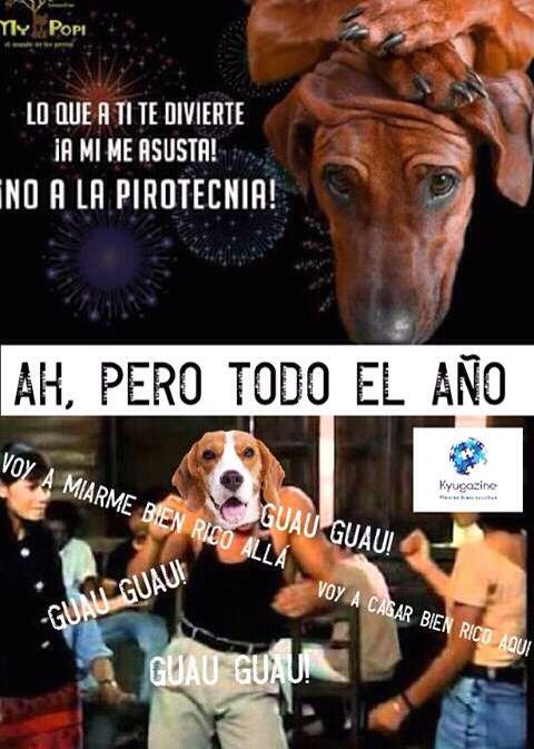 Pin De Mymiis Ba Gal En Memes Y Mas Memes Memes En Espanol Divertido