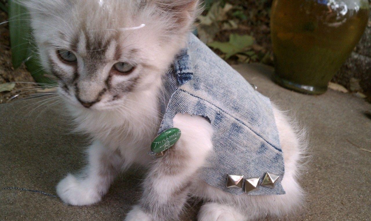 I Love Him I Love Him I Love Him Punk Cats Cats Animals