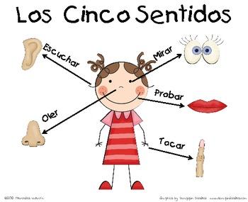 Imagen Relacionada Los Cinco Sentidos Organos De Los Sentidos Sentidos