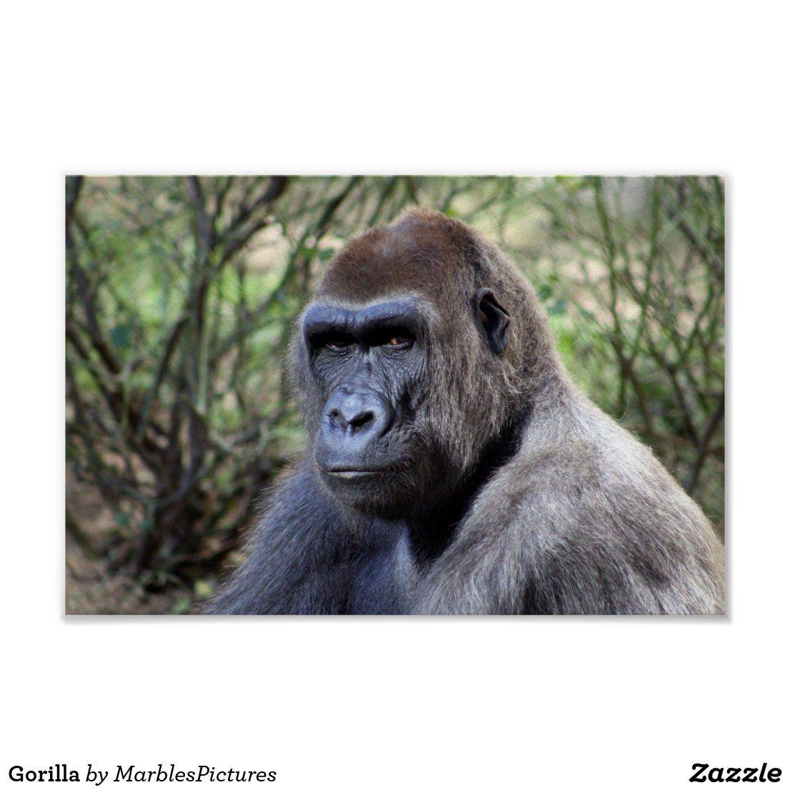 Gorilla Poster | Zazzle.com (With images) | Animal classification, Gorilla,  Primates