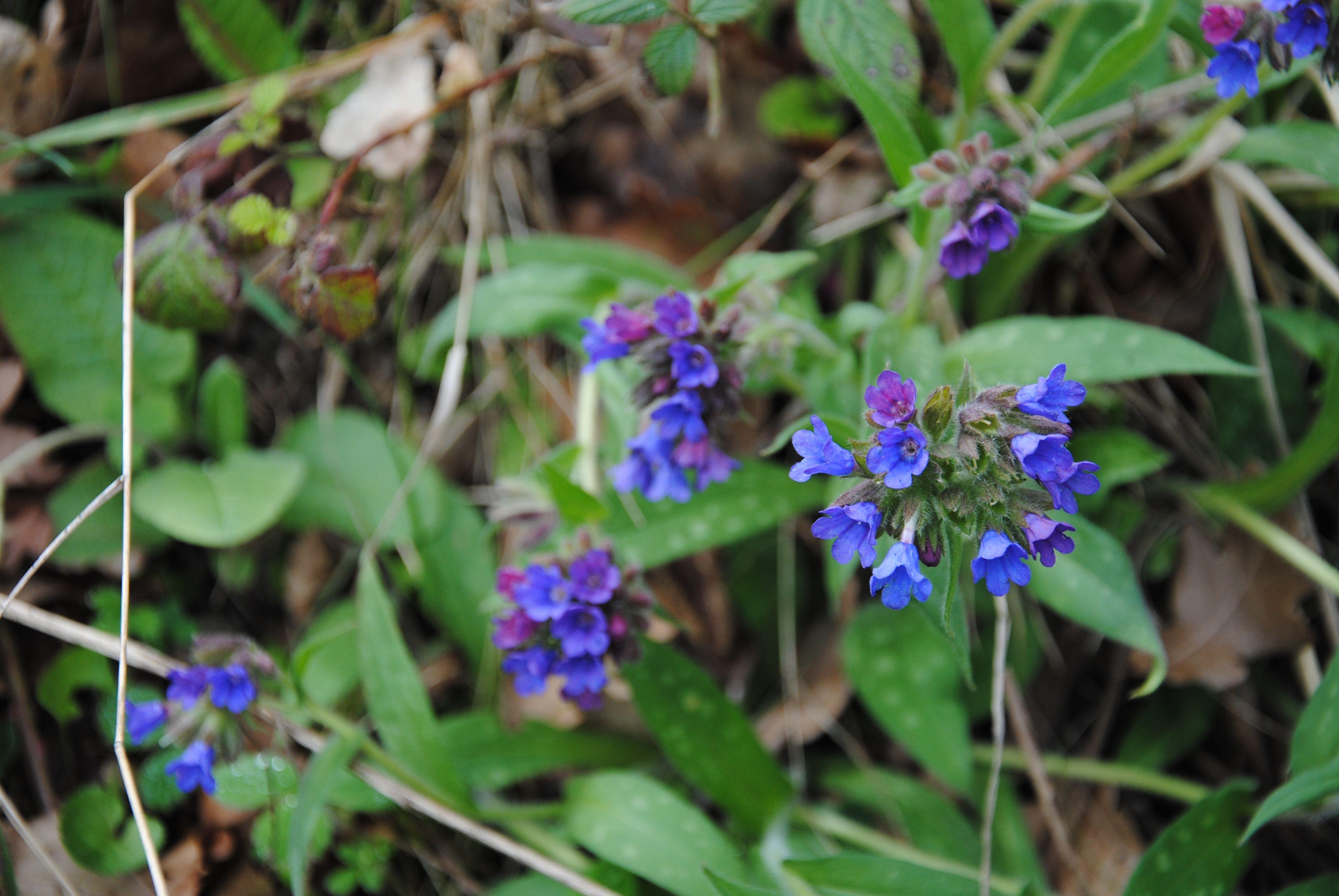 22+ Fleurs bleues au jardin ideas in 2021