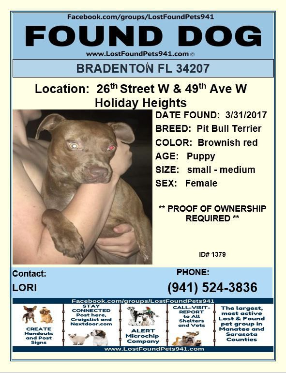 Do You Know Me Found Puppy Pitbull Lostdog Lostpetservices