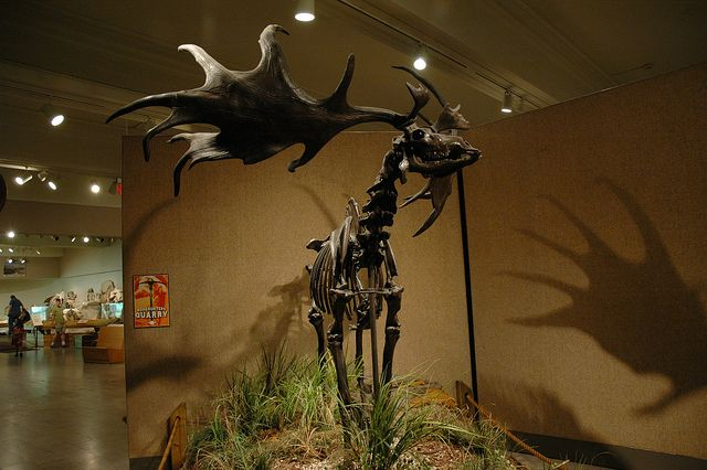 Carnegie Museum of Natural History  By Desiree Williams