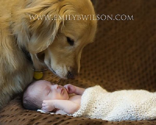 Newborns With Dogs 11 Baby Dogs Baby Pictures Dogs Kids