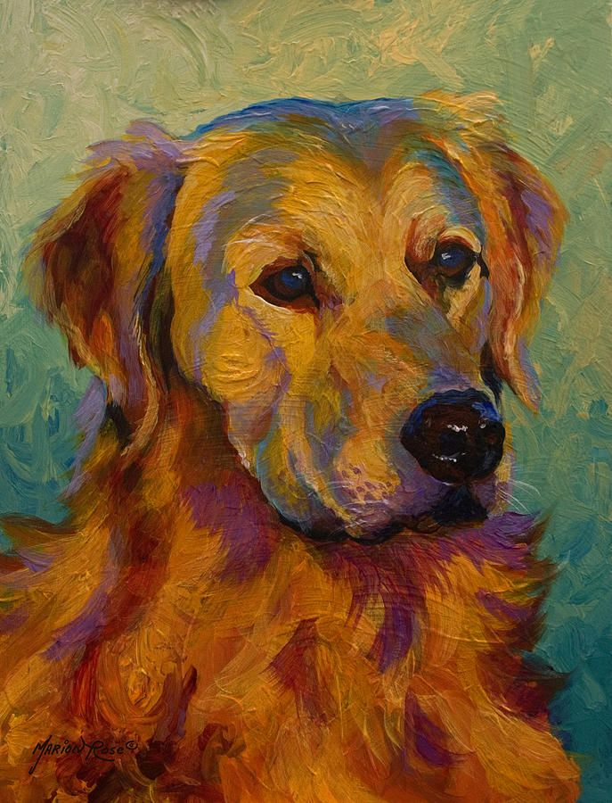 Golden Retriever Dog Paintings Animal Paintings Golden