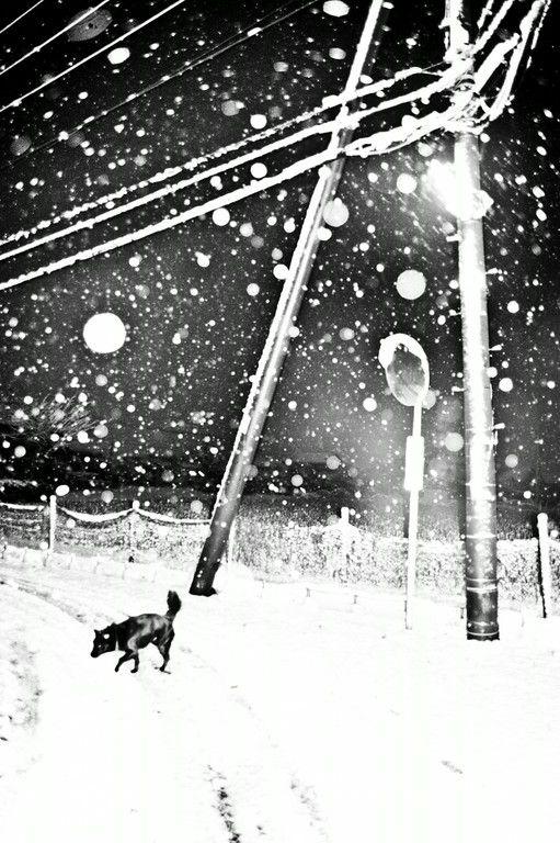 Man and dog © Hajime Kimura | Photographie, Chien