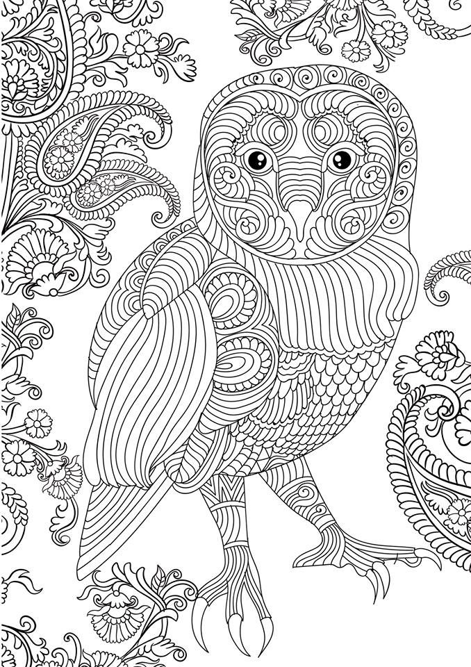 FREE OWL ADULT COLORING BOOK CLICK HERECheck Out This Cute Owl Image Straight Of Our New Book Get Your Free Printable EBook Version Great