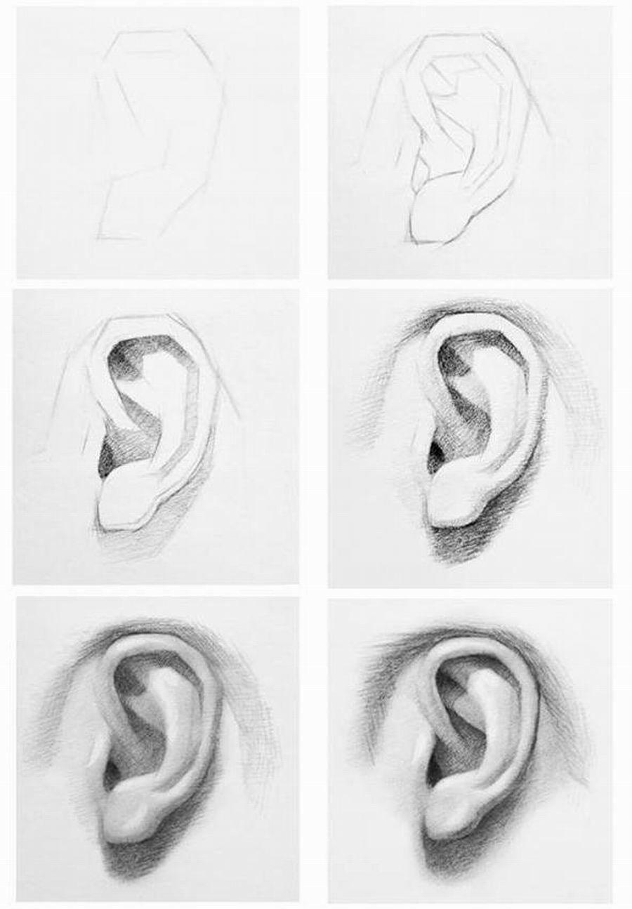 نماذج تعليمية لرسم الأذن في رأس الانسان ملفات أردنية Realistic Drawings Human Drawing Pencil Art Drawings