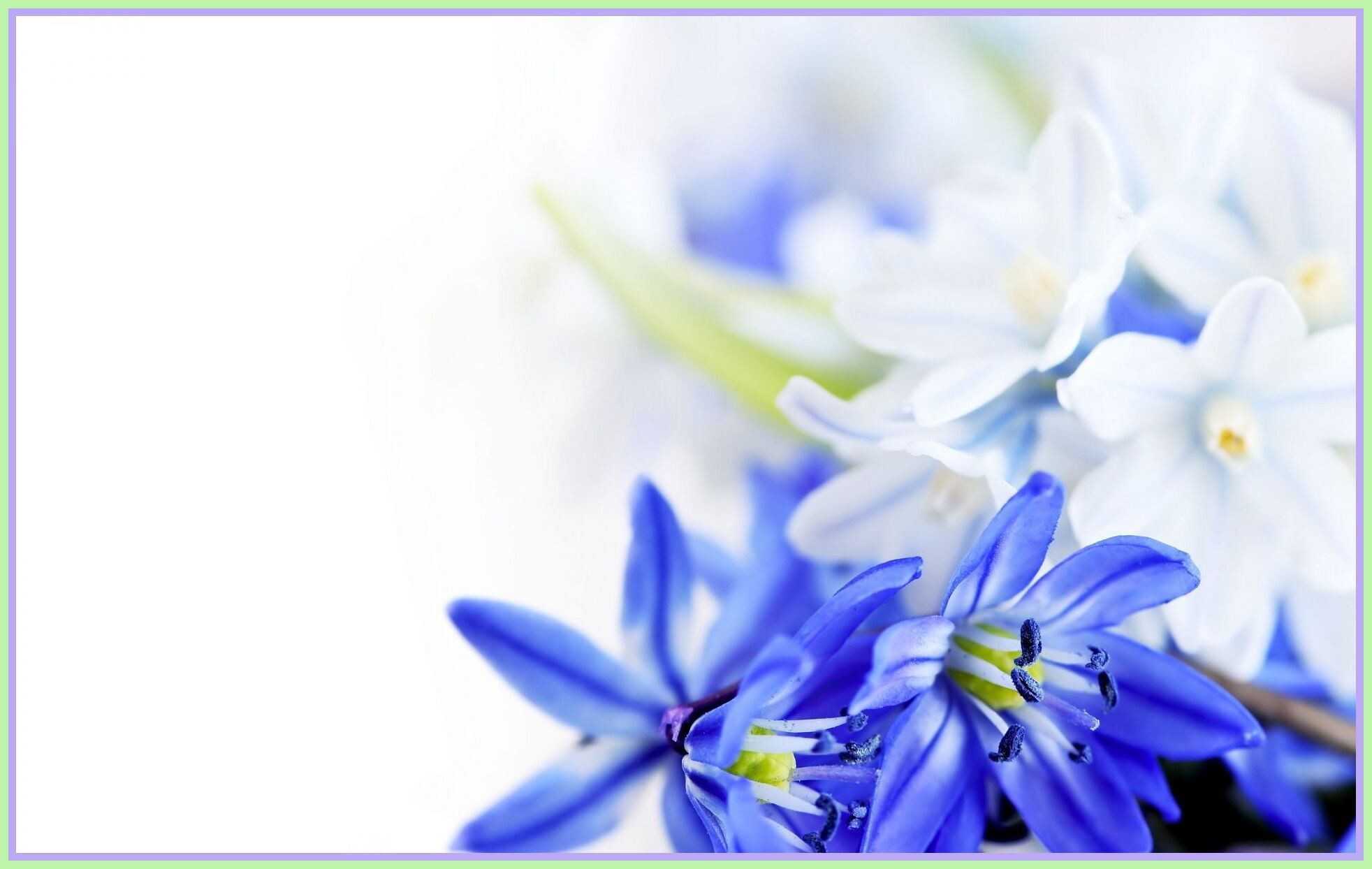 Flower White Background Pictures