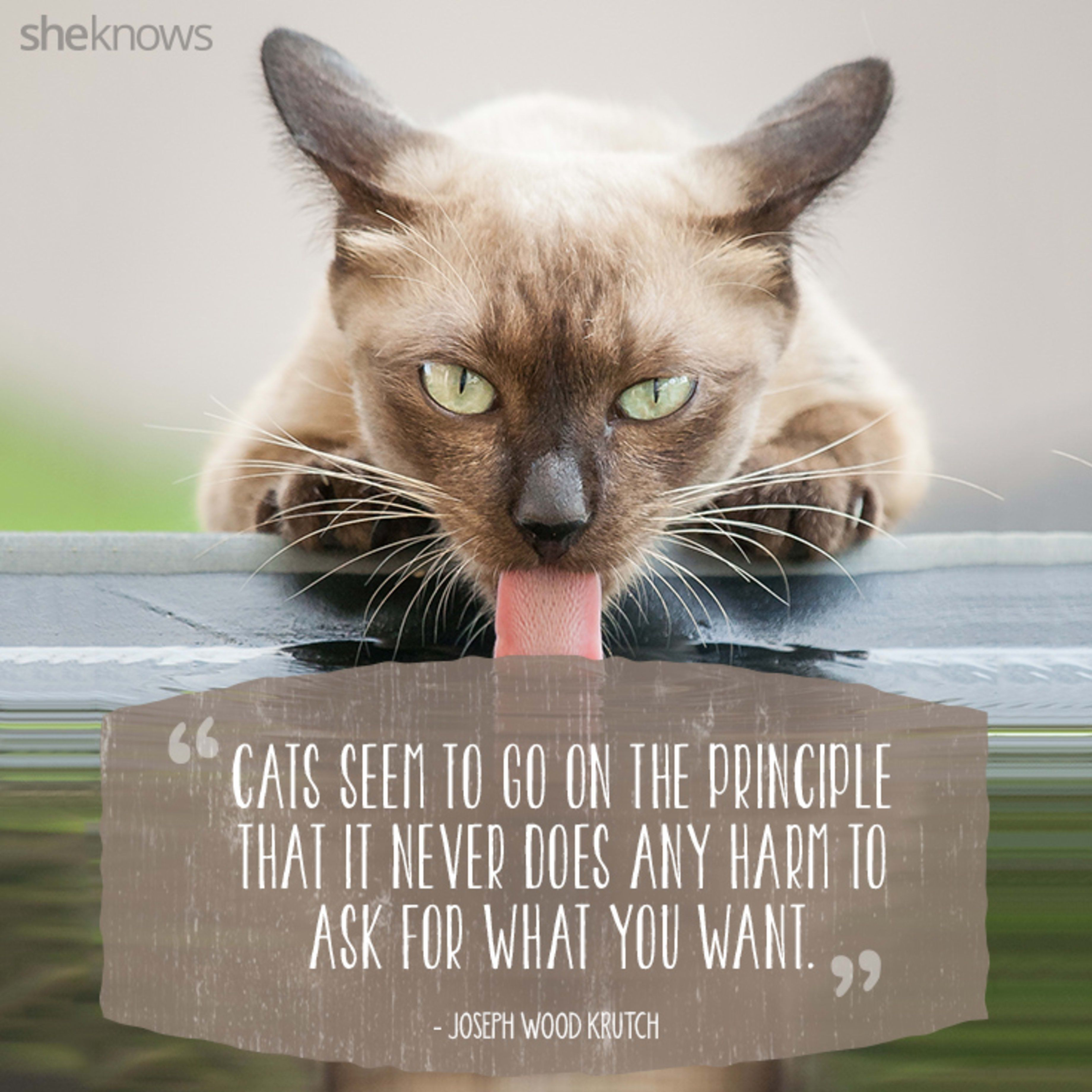 50 Cat Quotes That Only Feline Lovers Would Understand Cat Quotes Cats Funny Cat Pictures