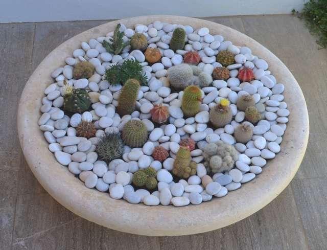 DIY A Mini Cactus Garden Cacti and Mini cactus garden