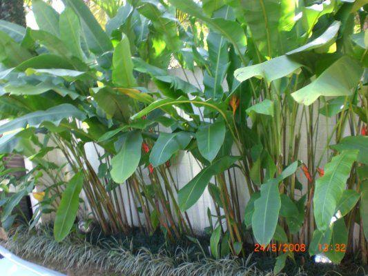 jardim com heliconias - Pesquisa Google