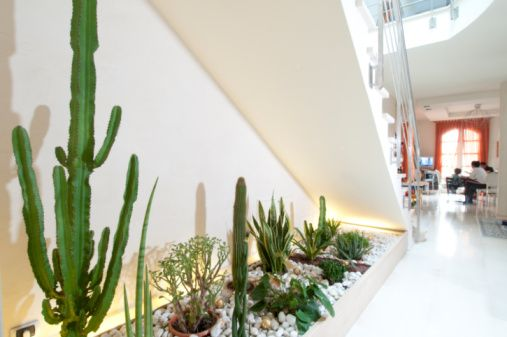 Home interior, indoor cactus rock garden is part of Indoor Rock garden - Home interior, indoor cactus rock garden