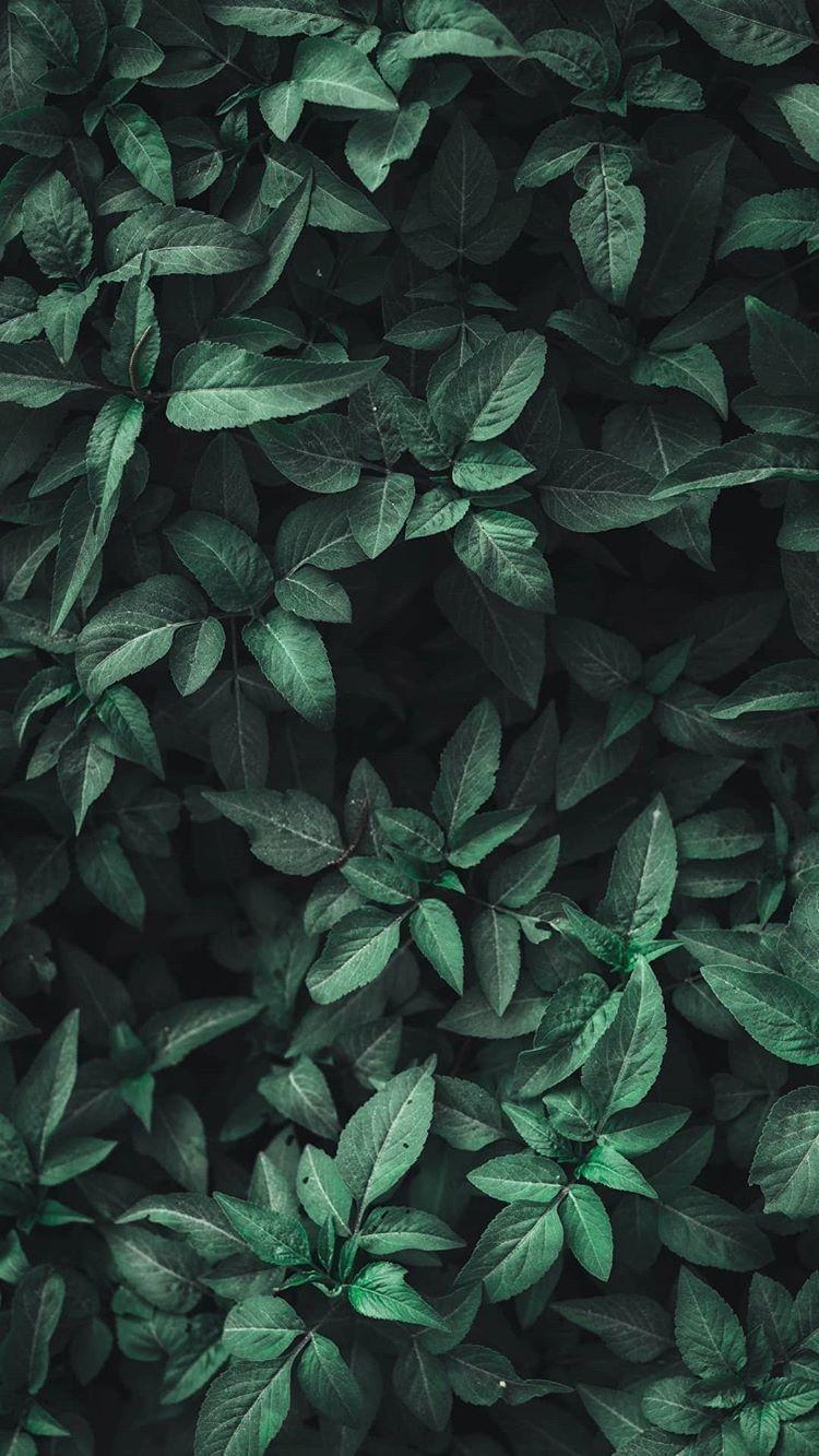 Green Aesthetic Green Aesthetic Leaves Nature Wallpaper Latar Belakang Gambar Menakjubkan Dinding Gambar