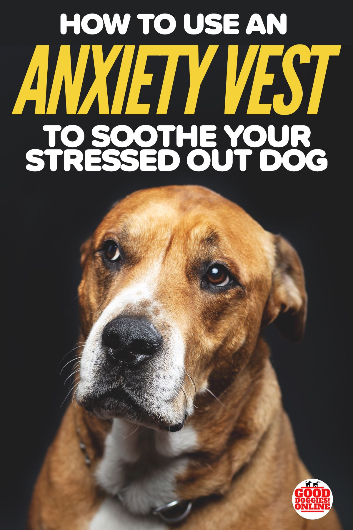 Discussion on this topic: How To Soothe a Stressed Pet, how-to-soothe-a-stressed-pet/