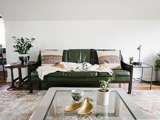 Dog On Green Leather Sofa Sfbybay