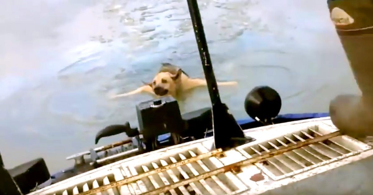 Dog Clinging To A Piece Of Ice Is Spotted By Boaters And Saved!