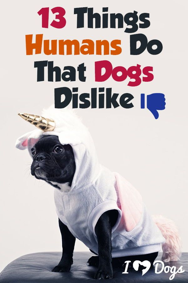 13 Things Humans Do That Dogs Dislike Dogs Dog Love Love Pet