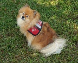 Help Find Zeus Lostpetfinders Losing A Dog Pet Finder Losing A Pet