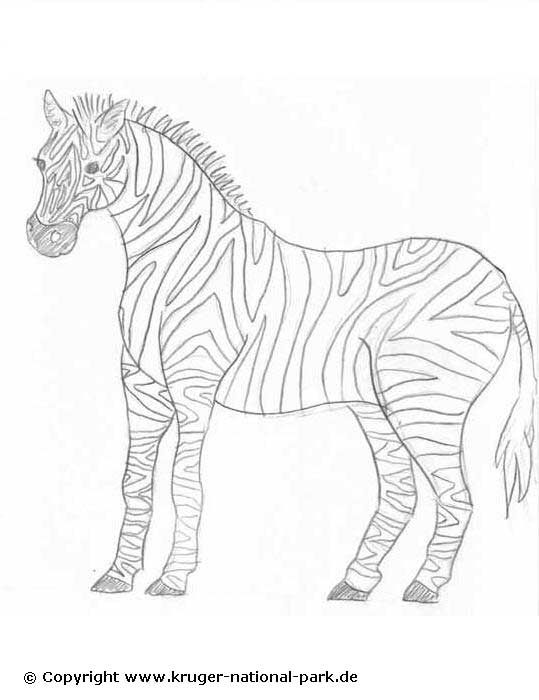Ausmalbilder Afrikanische Tiere Coloring 2