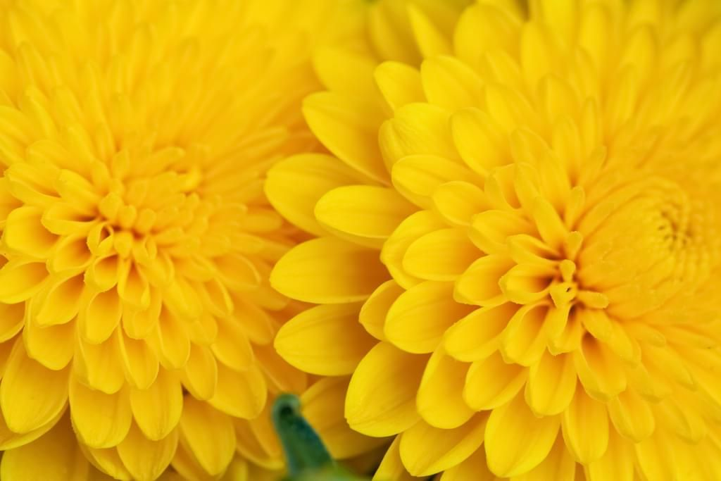 Reference Pack: 108 photos of Flowers Macro Detail by Tanaly. Different garden flowers macro pack.
