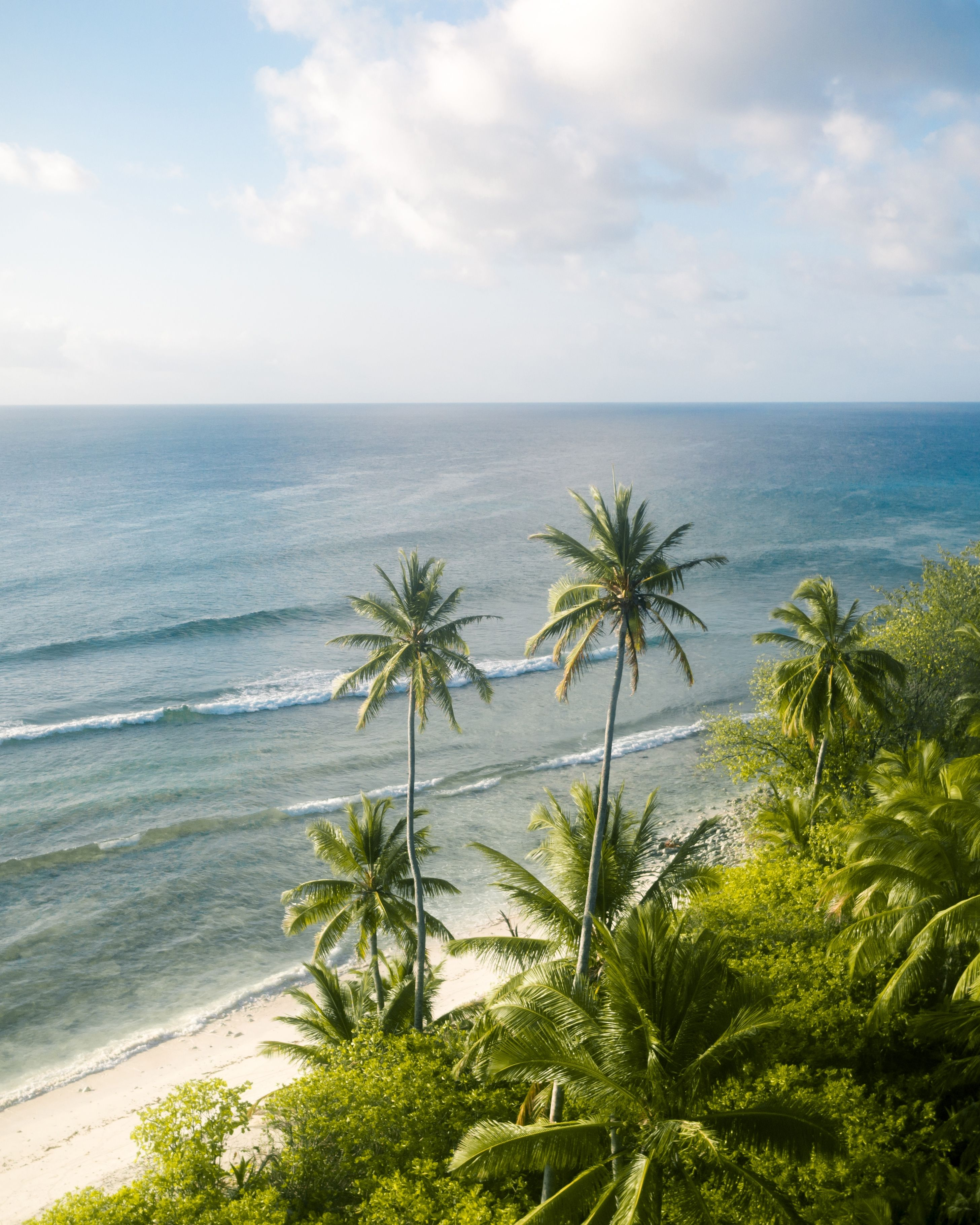 Where The Jungle Meets The Sea Cocos Islands Australia Hd Wallpaper In 2020 Cocos Keeling Islands Cocos Island Australia Wallpaper