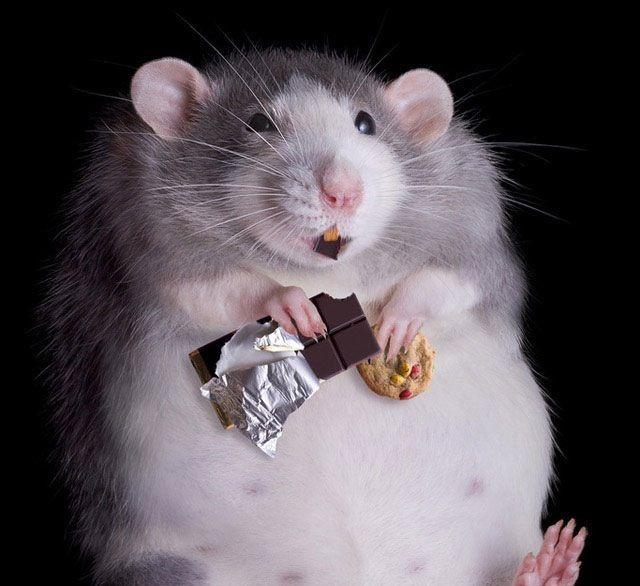 Hamster twinks