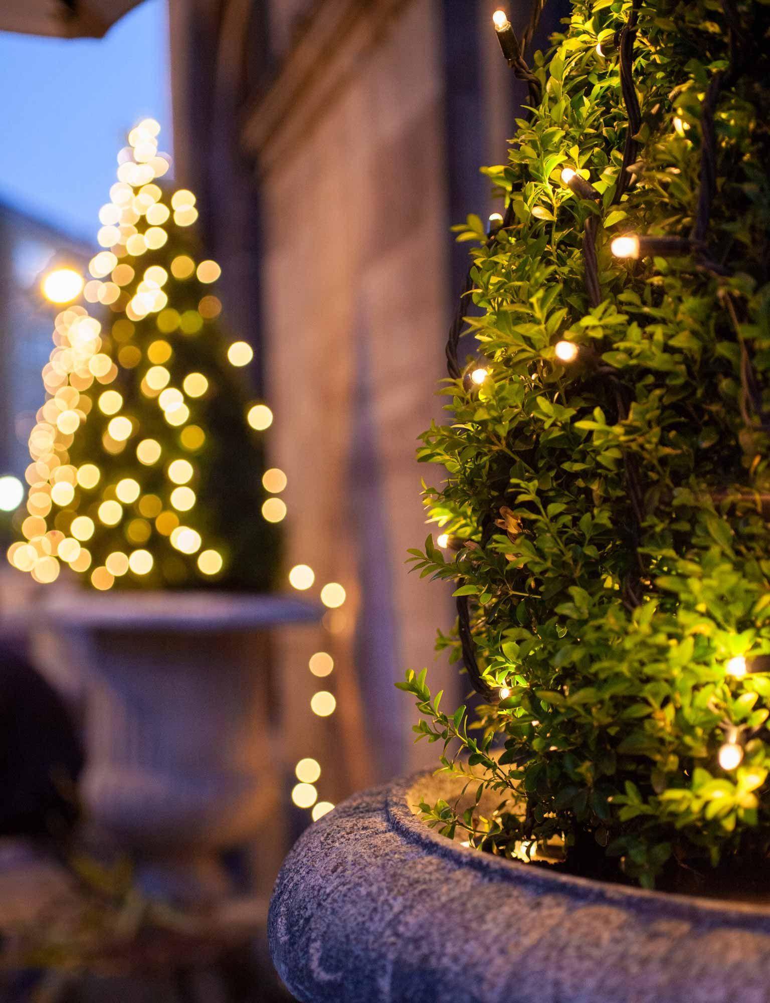 Consider fixing outdoor Christmas lights in the surrounding garden ...