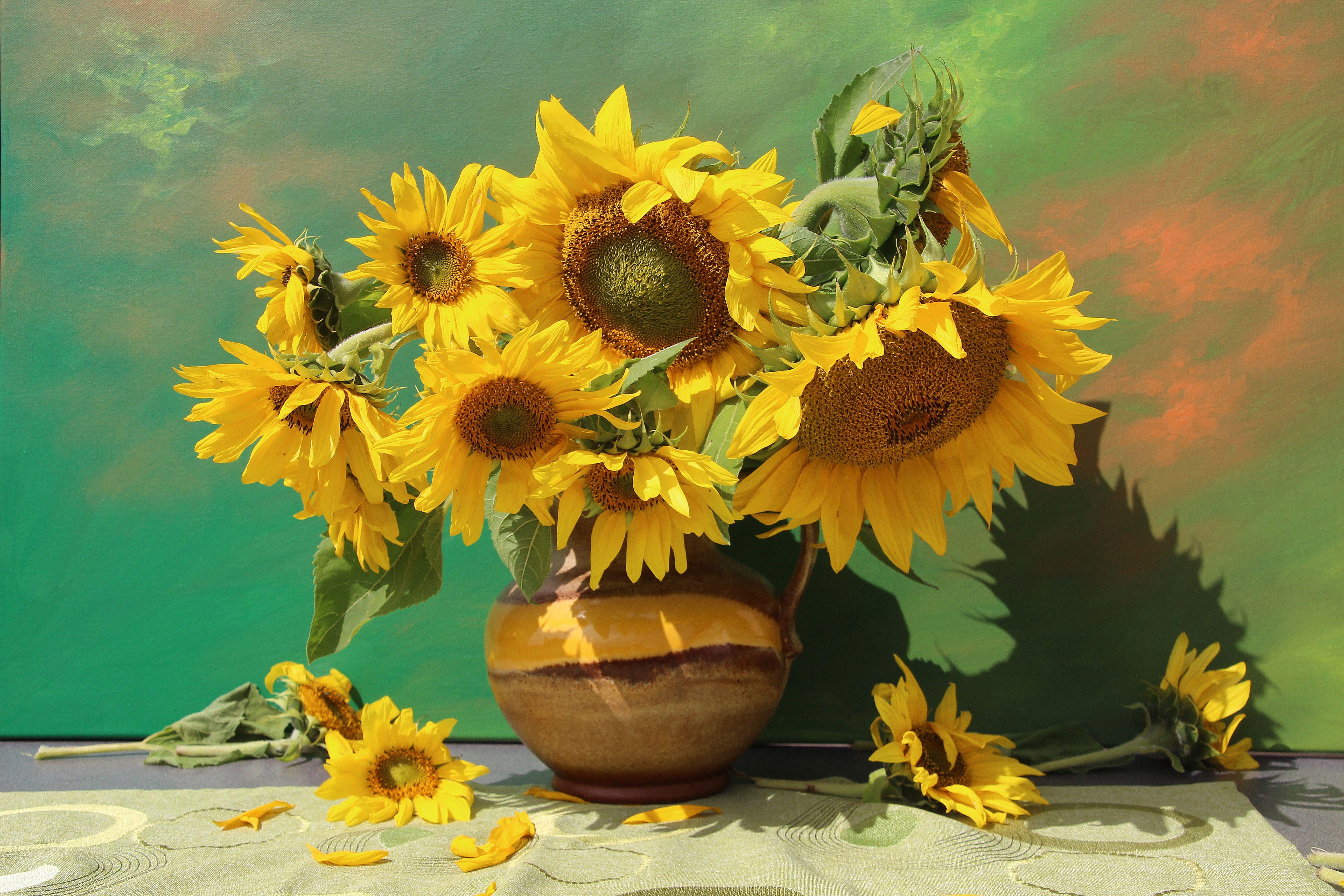 Vintage Blooming Roses Design Transparent Png Premium Image By Rawpixel Com Flower Illustration Flower Drawing Floral Poster