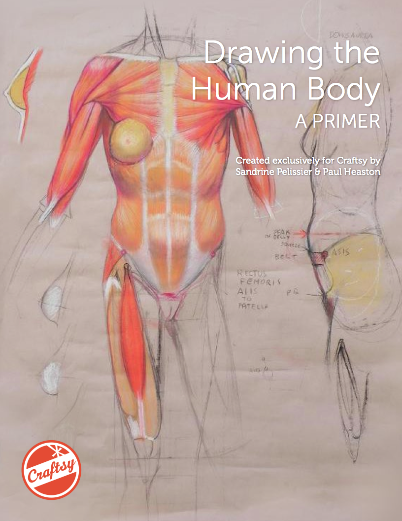 Form Function Learn How To Draw The Human Body With A Free Eguide