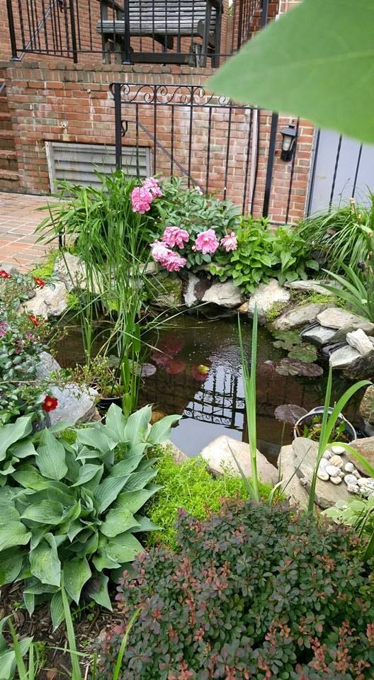 Cute garden from #Washington, #DC