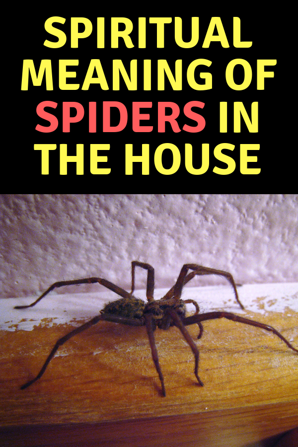 Spiritual Meaning of Spiders in the House + Legends&Dream