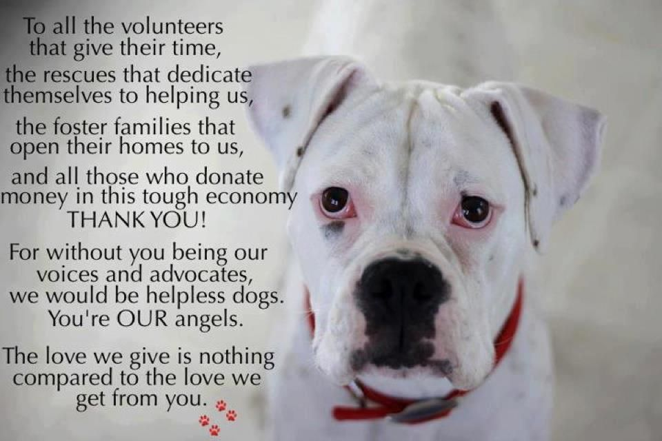 Quotes About Volunteering With Animals Quotesgram Volunteering With Animals Animal Rescue Quotes Volunteer Quotes