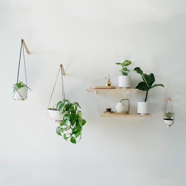 Photo of Wall Plant Hanger