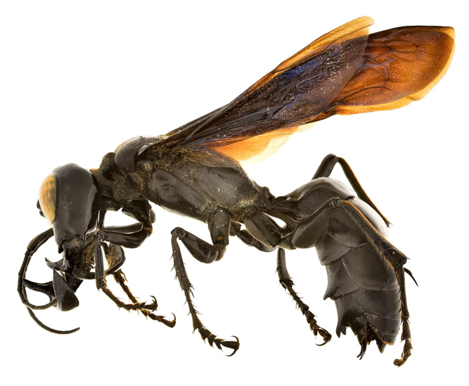 Related image Insects, Wasp, Bugs, insects