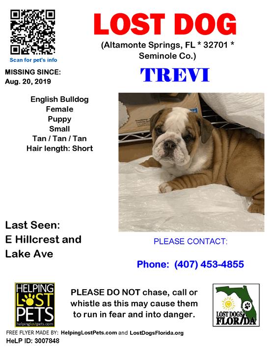 Lost Dog Have You Seen Trevi Lostdog Trevi Altamontesprings E Hillcrest Lake Ave Fl 32701 Seminole Co Dog 08 20 2019 Female Englishbulldog Tan