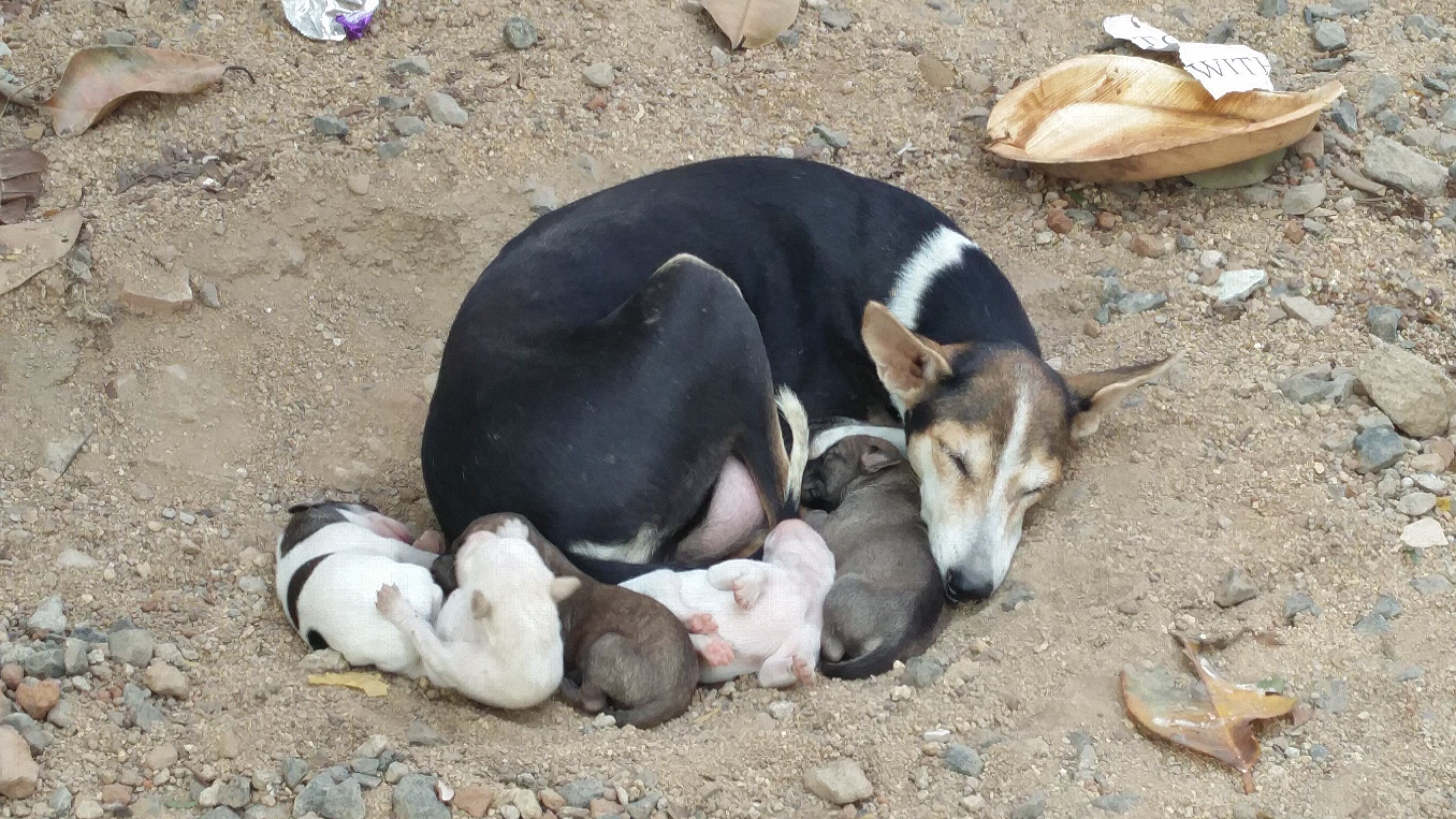 How many puppies to do you see? http://ift.tt/2edDhwM