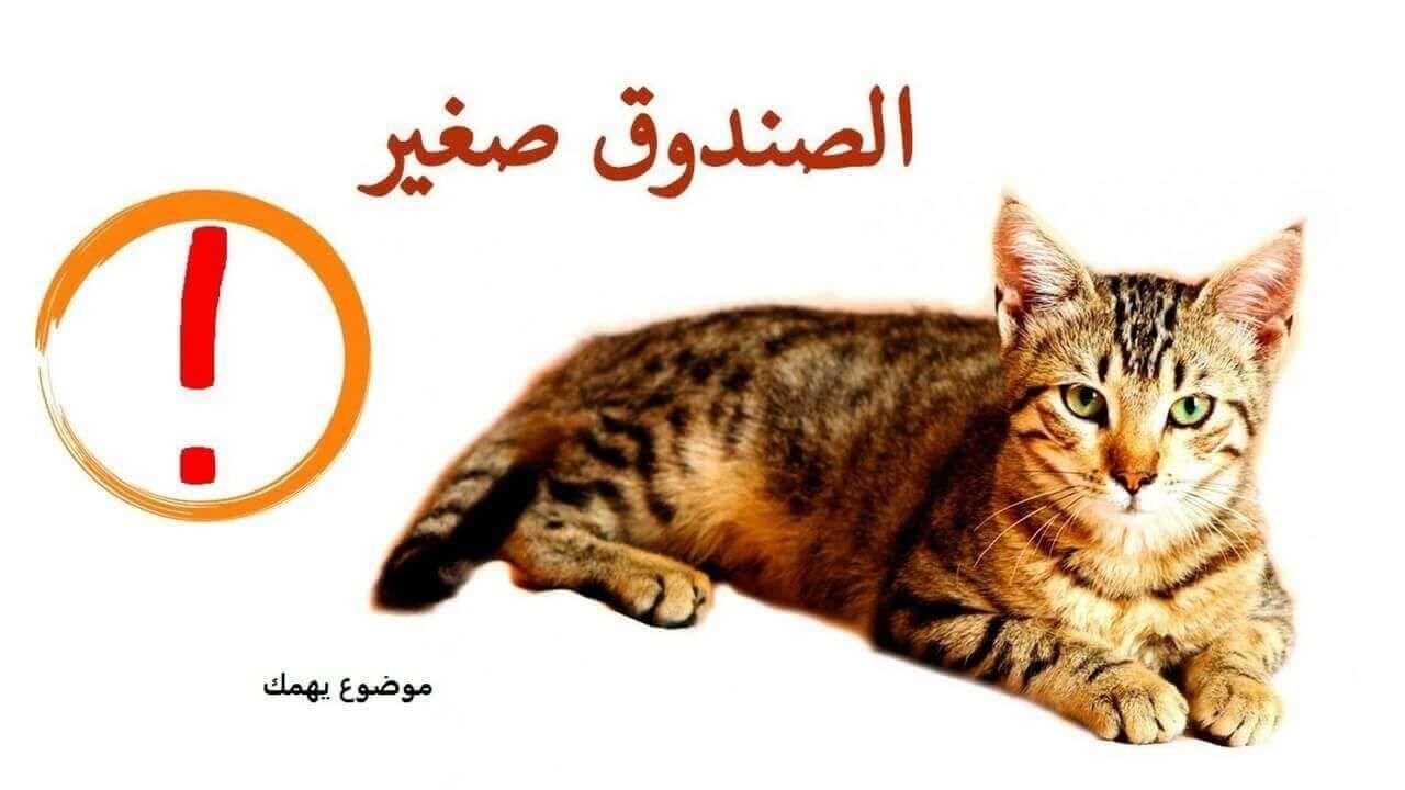 كيفية تربية القطط الصغيرة الشيرازى الذكر موضوع يهمك Cats Animals